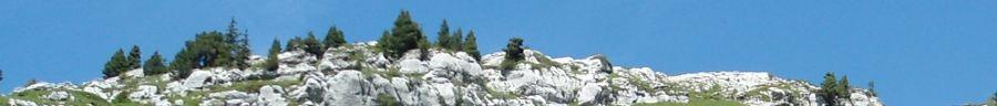 Près du col de l'alpe - chartreuse